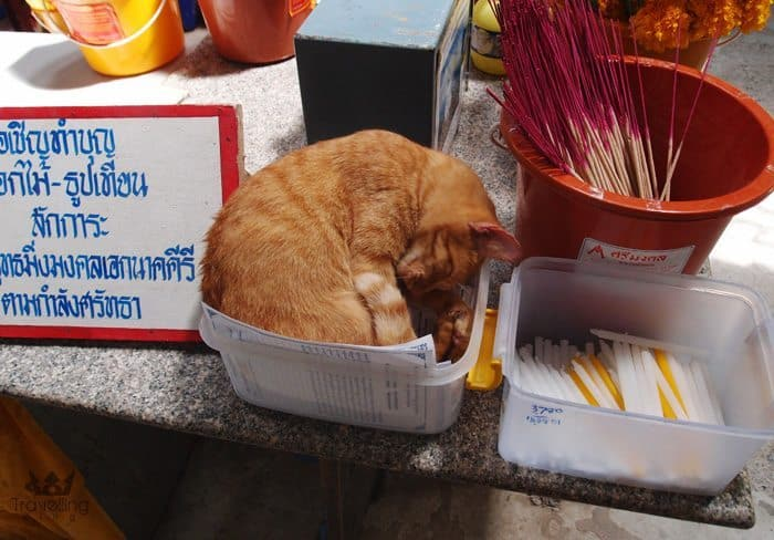 Cute Kitten in a container