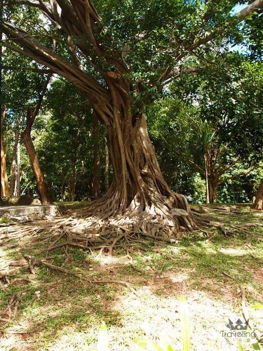 Monkey Hill viewpoint Phuket island