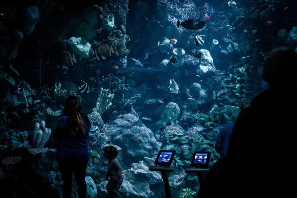 bangkok aquarium - things to do in Bangkok