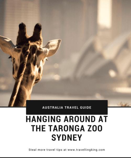 Hanging around at the Taronga Zoo Sydney