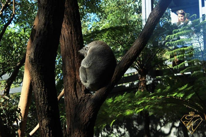 Hanging around at the Taronga Zoo Sydney