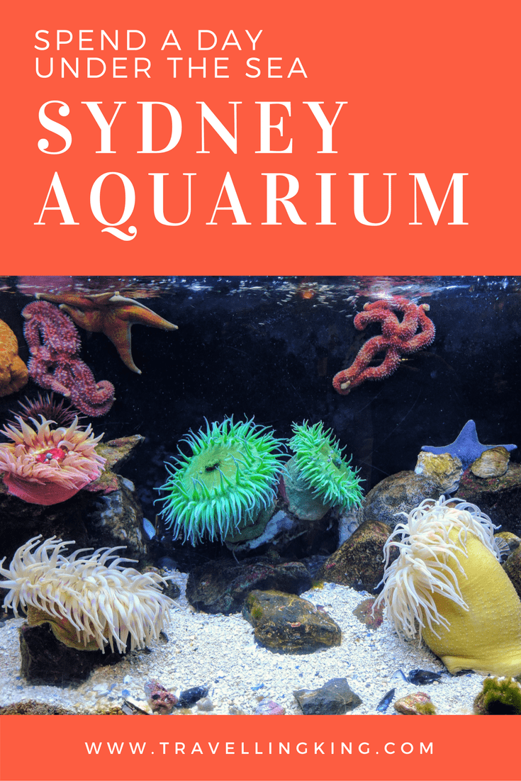 Spend a day under the Sea at The Sydney Aquarium