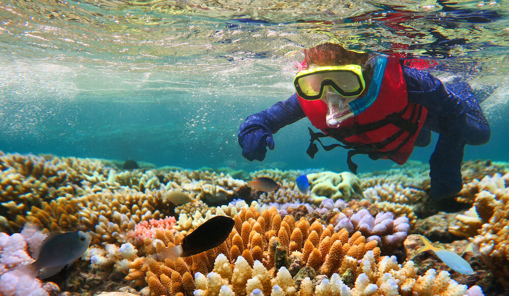 Child snorkeling dive in the Great Barrier Reef in the tropical north of Queensland Australia