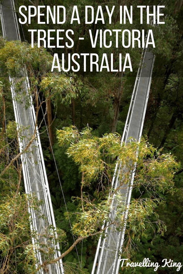 Otway Fly Treetop Adventures - Victoria Australia