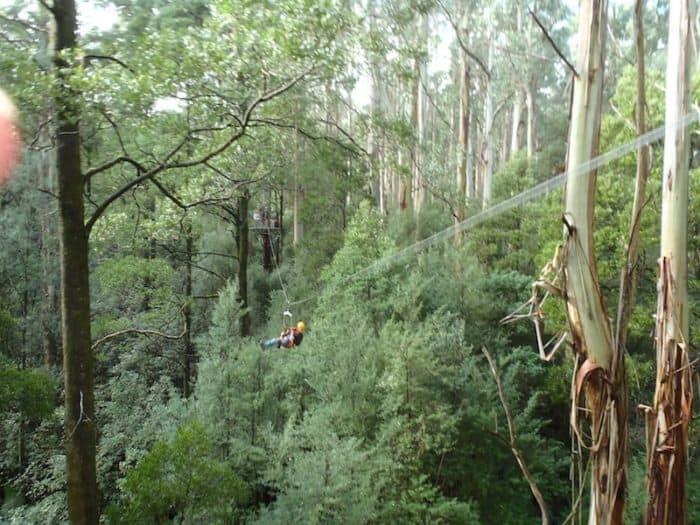 Zip Lining through the Otway Rainforest
