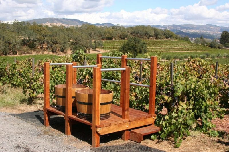 vineyard-1331574_1280