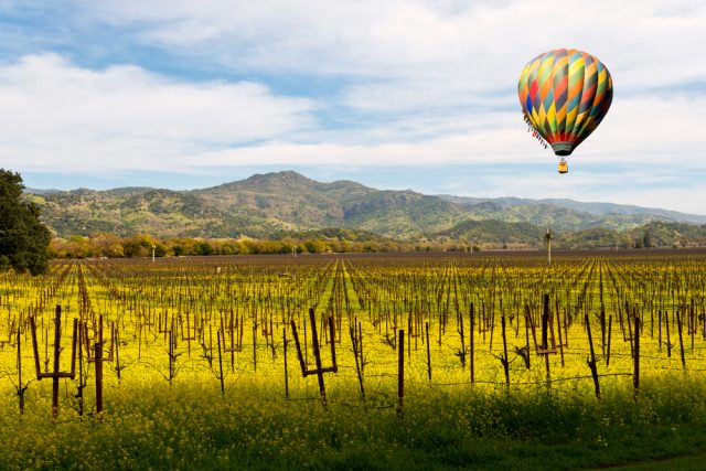 4 Small Wineries you MUST visit in Napa