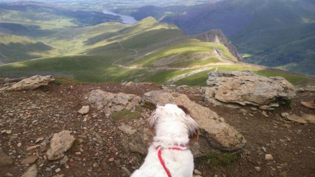Best Dog Walk Up Snowdon