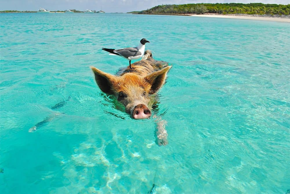 JustFly Reviews the Top 5 Tropical Hot Spots
