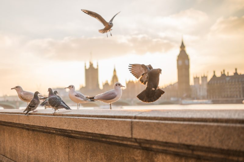 Amazing view of London with birds flying