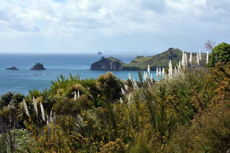 7 Must See New Zealand Beaches