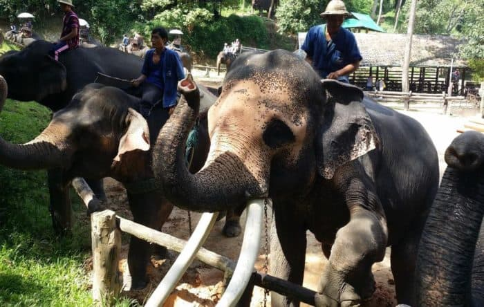 Elephant Camps