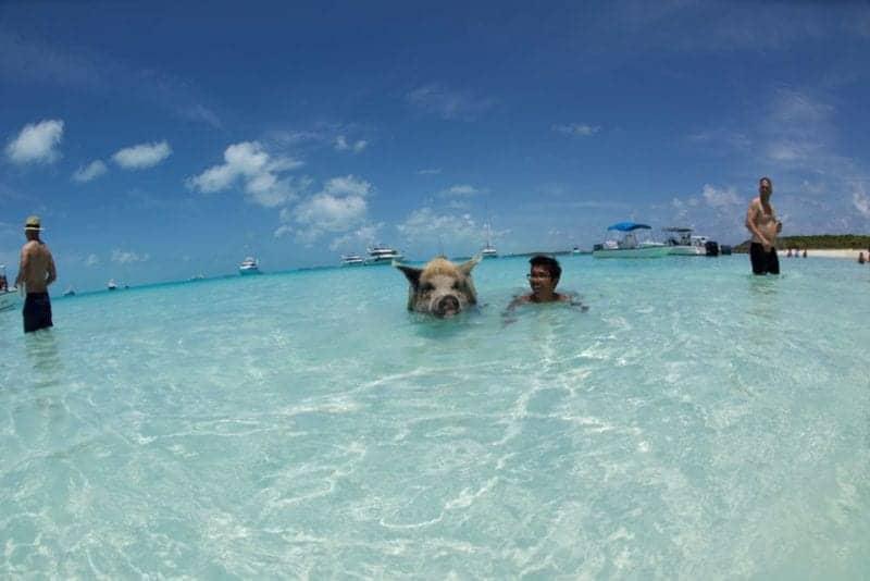 Exuma Cays: Where Man Meets Wildlife