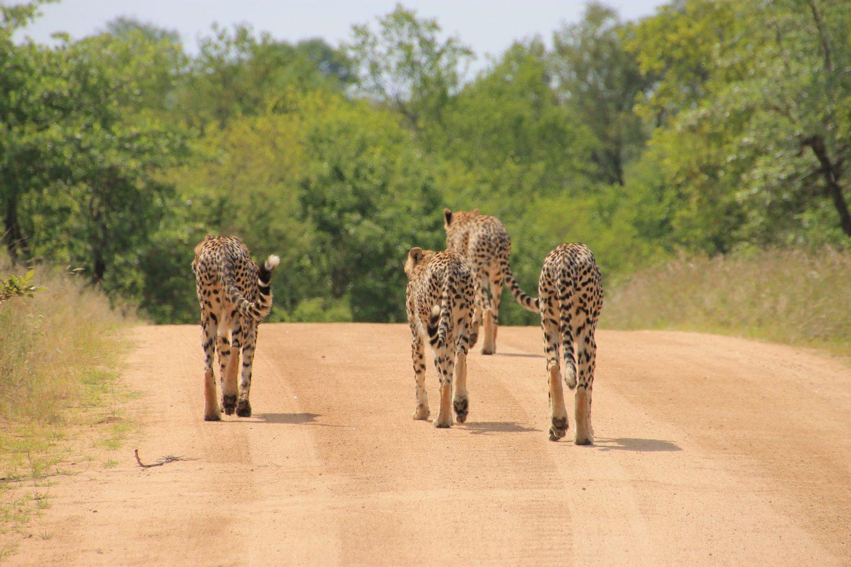 A Glance Inside Kruger National Park, South Africa