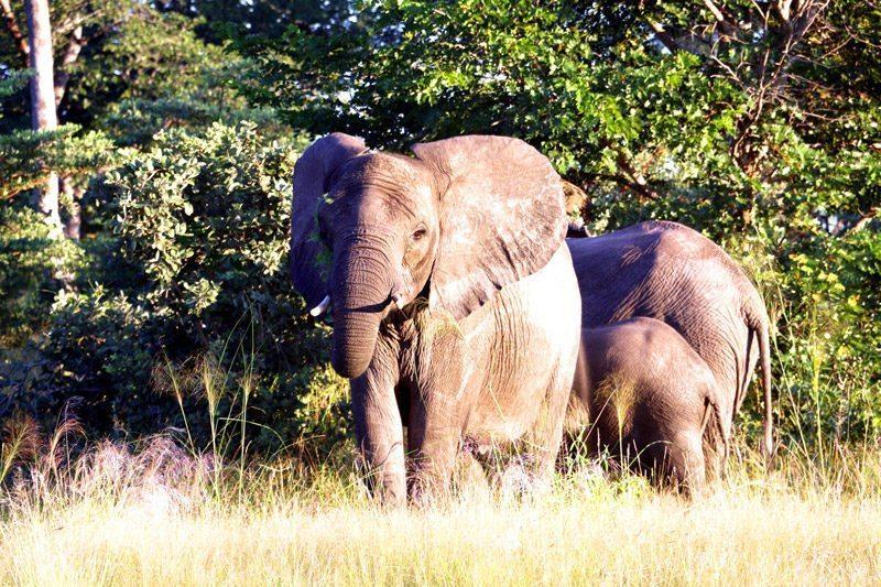 Budget travel Namibia elephants