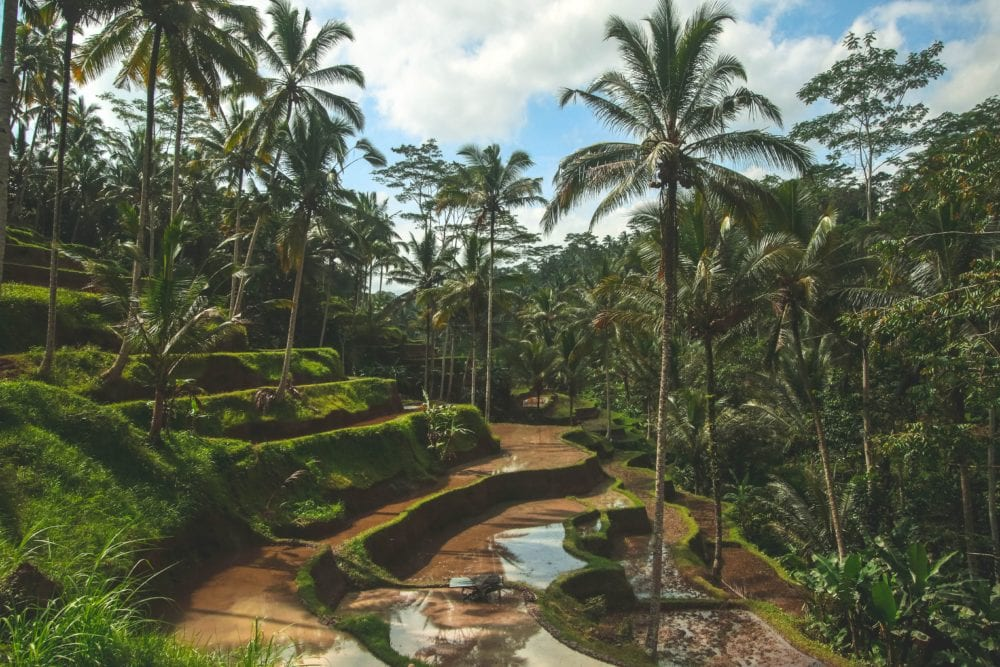 Ubud - Where to stay in Bali Indonesia - Sit back and Relax or Party hard!