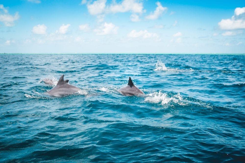 Dolphin Cruise - Male - 10 Things to do in the Maldives