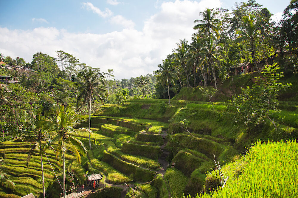 Tegallalang Rice Terraces. Ubud, Bali, Indonesia. Beautiful green rice fields, natural background. Travel concept, famous places of Bali