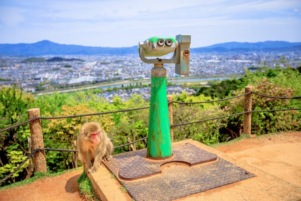 Japanese macaque near observation binoculars in Iwatayama Monkey Park, Arashiyama, Kyoto, Japan. There are 120 Macaca Fuscata monkey in the park. Spectacular views of Kyoto city on background.