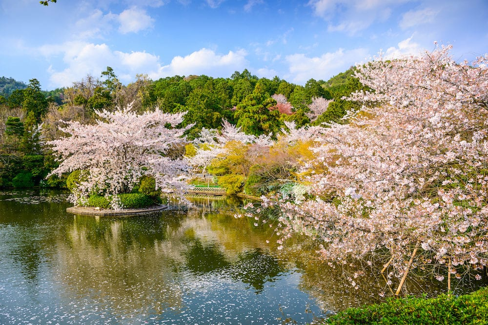 Kyoto, Japan springtime at Ryoanji Temple's pond.