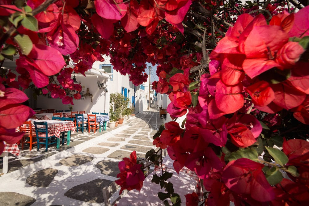 MYKONOS, GREECE - View over the old cobbled street in Mykonos town district Little Venice through bougainvillea bush in blossom.