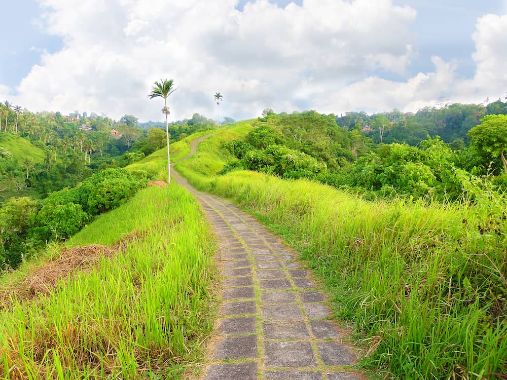 Photo taken in Bali. Road at the top of the hill in the green jungle of bali, ubud