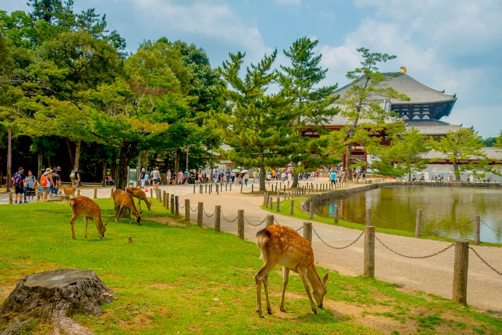 Nara, Japan - Unidentified people walking to Todai-ji temple with some wild deers in front, with an Eastern Great Temple behind. This temple is a Buddhist temple located in the city of Nara, Japan.