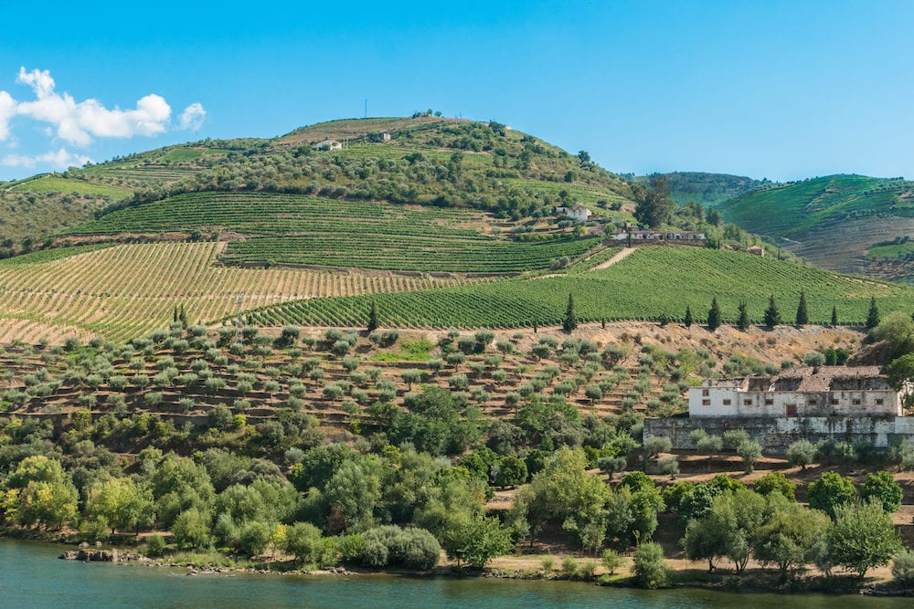 Terraced vineyards in Douro Valley Alto Douro Wine Region in northern Portugal officially designated by UNESCO as World Heritage Site.