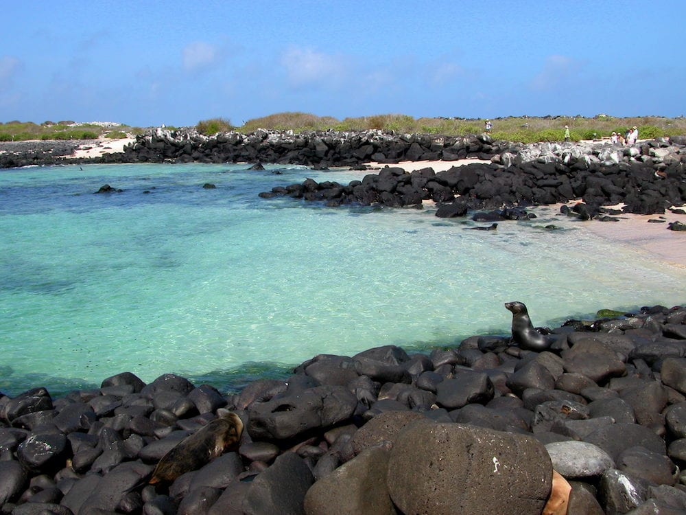Marine life on the shores of Galapagos Islands. Black volcanic rock contrasts aginst crystal clear water. Seals swimming in ocean tourists on beach.