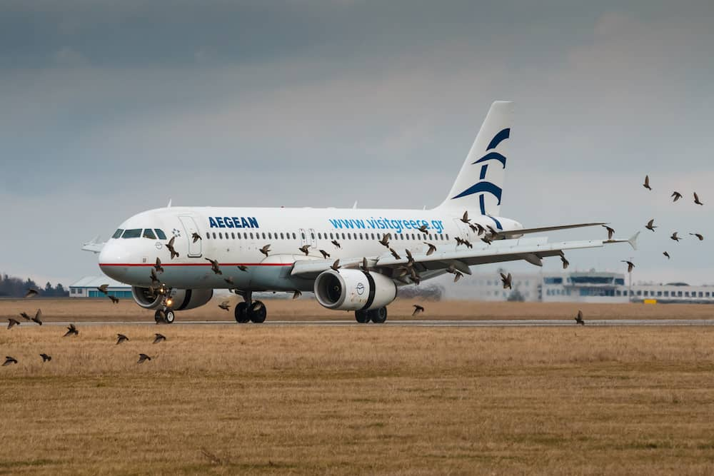 PRAGUE CZECH REPUBLIC Airbus A320 after landing at PRG Airport in dangerous situation can caused bird strike in Prague. Aegean Airlines is the largest Greek airline.