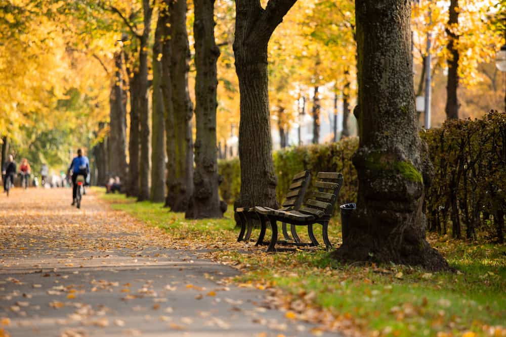 Autumn in the Tiergarten park in Berlin