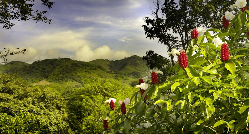 A view of costa rica with red flowers in the foreground