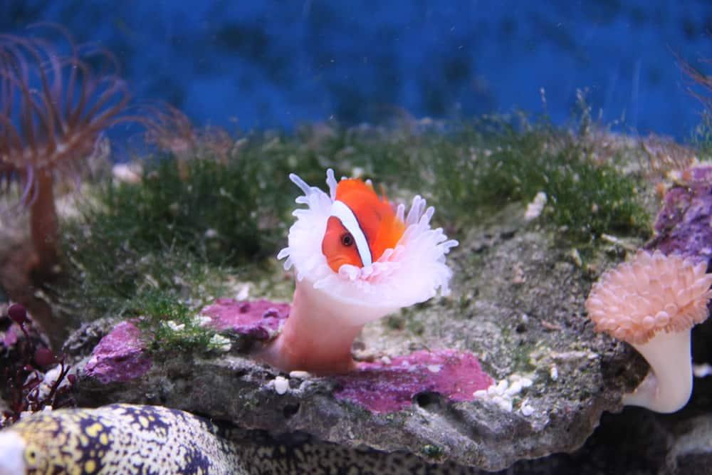 Underwater World, Fish and coral in aquarium, Langkawi