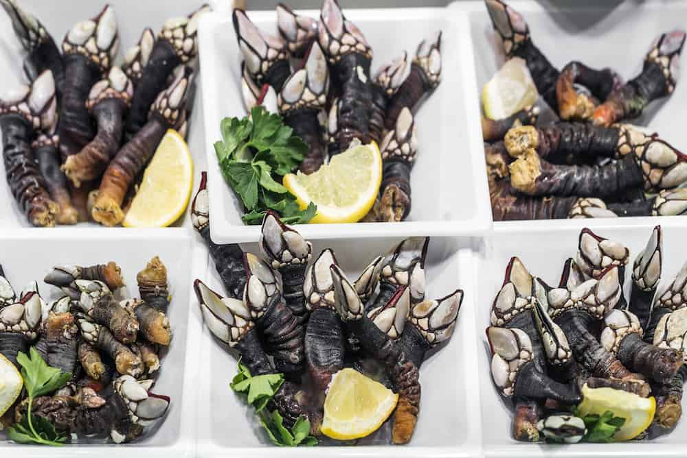 fresh percebes goose barnacles rare unusual seafood on display in Portugal