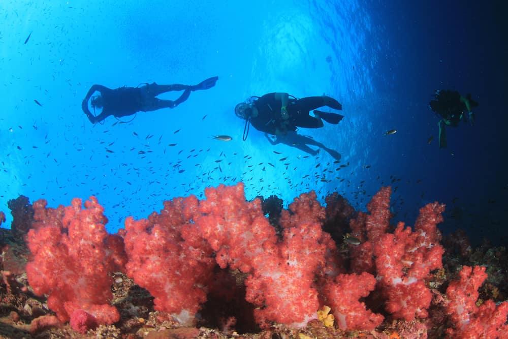Scuba dive coral reef in ocean