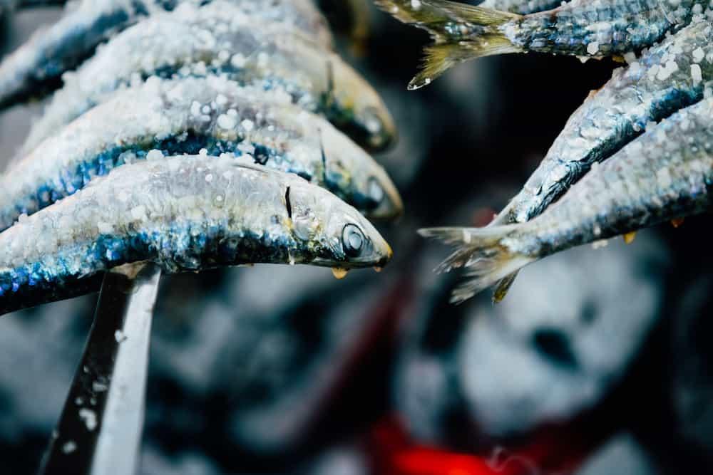 Fish Espetos preparation. Espetos - skewer with sardines in open fire outdoor. Spanish cuisine.