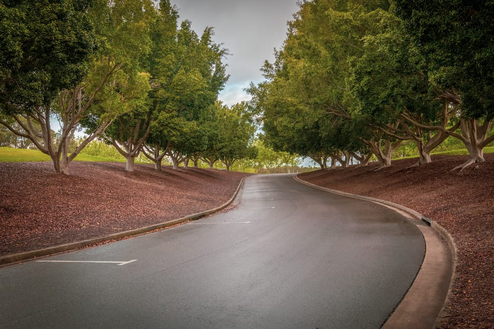 Tree lined curved road in Bicentennial Park, Sydney. Damp road.