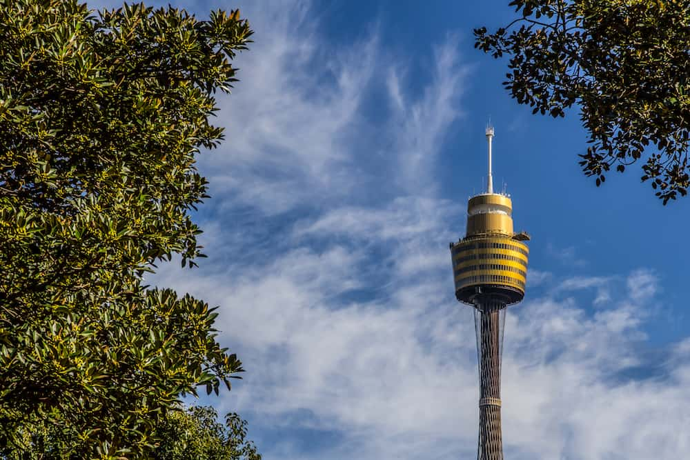Sydney tower view from park on sunny day