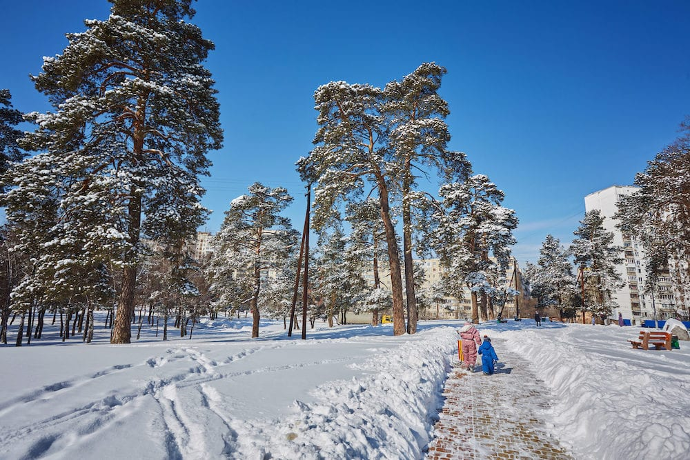 Winter, forest, snow. Snow-covered pine forest, trees in the snow, a beautiful winter landscape, nature