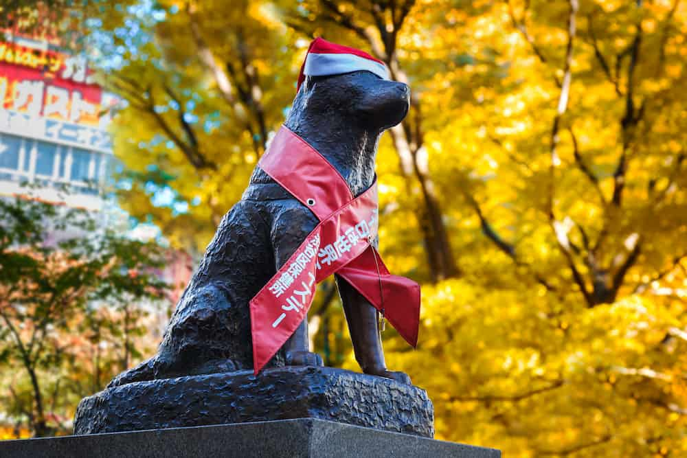 TOKYO, JAPAN - Hachiko statue at Shibuya station, the dog is remarkable loyalty which continued for ten years waiting for his owner at the station after his owner's death