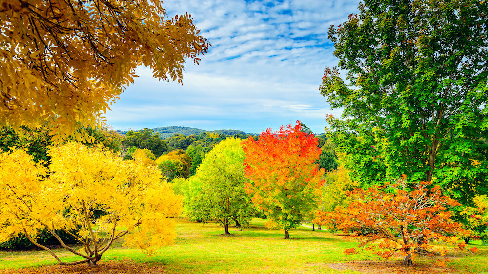 Colourful autumn in Mount Lofty, Adelaide Hills, South Australia