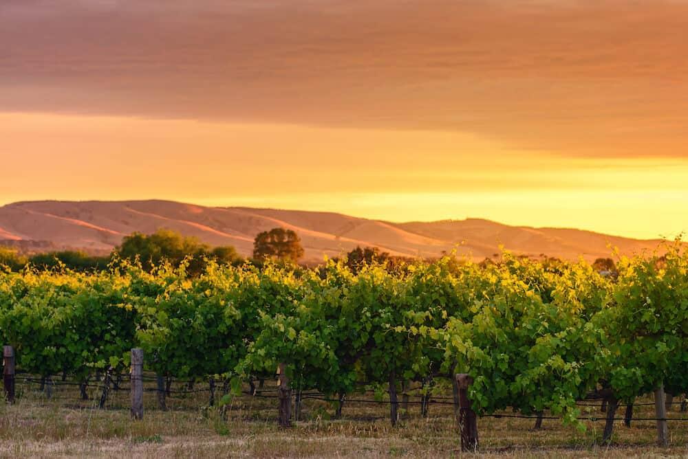McLaren Vale wine valley at sunset, South Australia