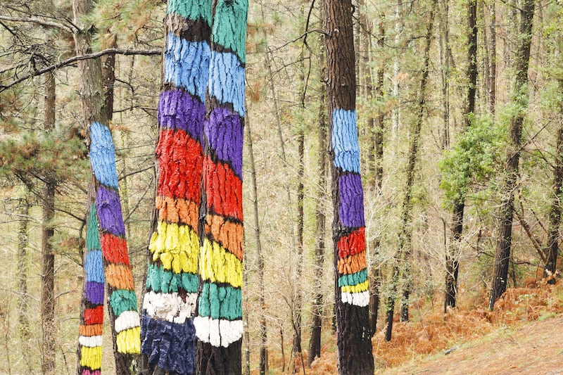Painted trees on the forest of Oma Urdaibai Biosphere Reserve Biscay Spain.