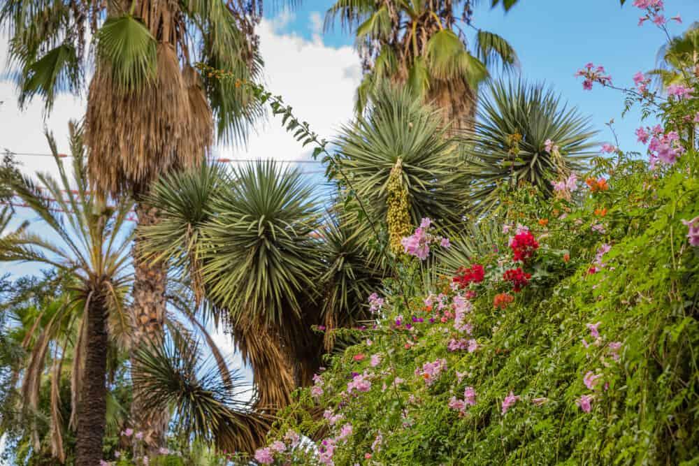 Botanical garden Jardin Majorelle in Marrakesh (Morocco)