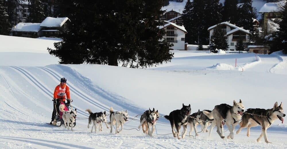 International Sled Dog Race at Lenzerheide Switzerland
