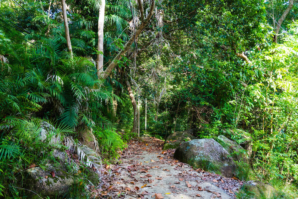 Jungle trekking on tropical Tioman island in Malaysia. Beautiful nature of south east asia.