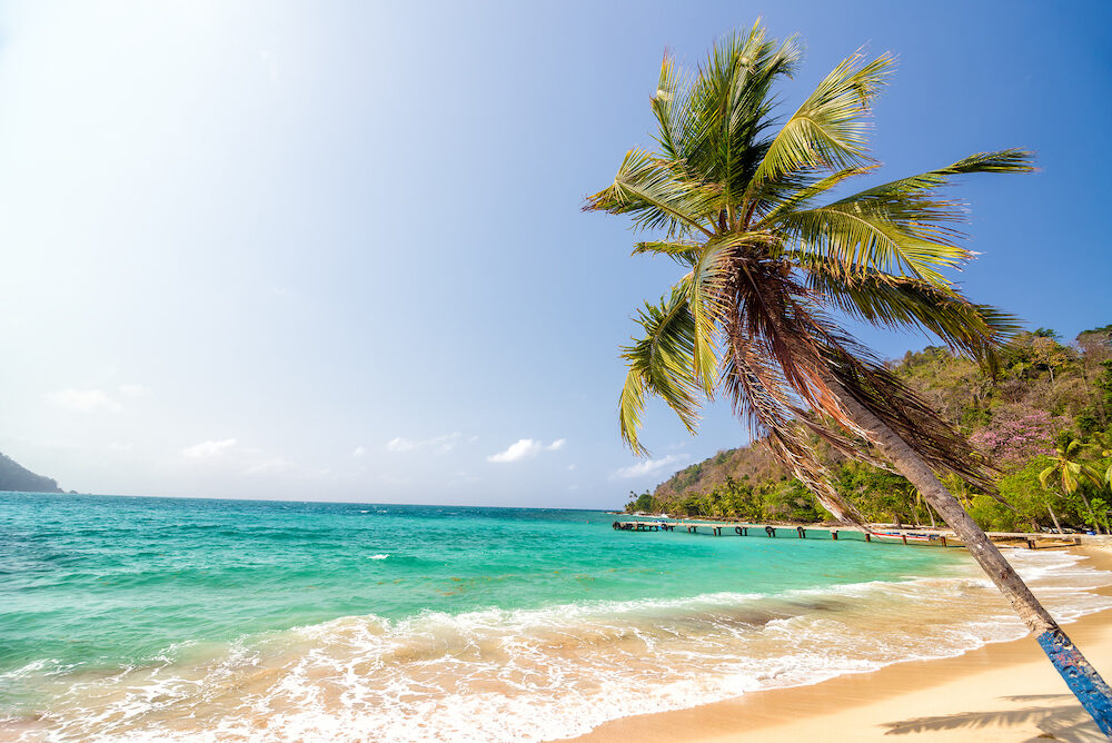 White sand beach and beautiful palm tree in La Miel Panama near Capurgana Colombia