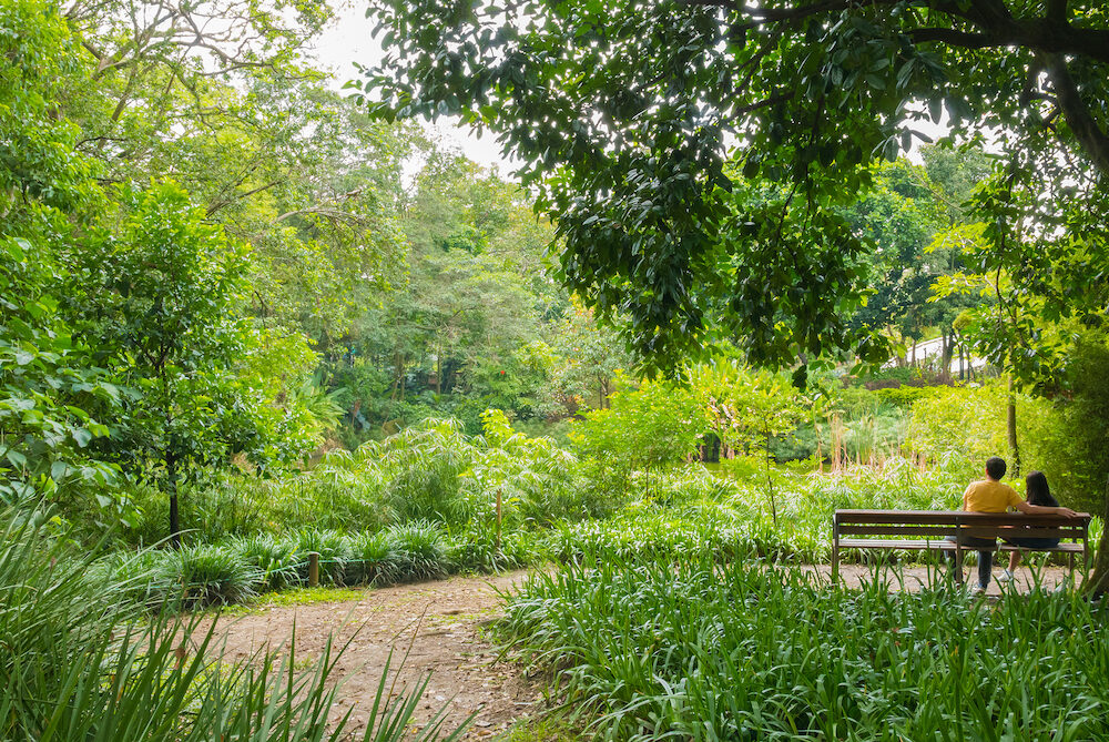 lovers on the park bench in a botanical garden