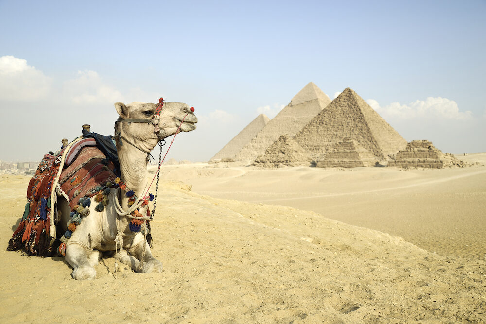 Panoramic View Of The Pyramids From Giza Plateau, Cairo, Egypt. Camel Sitting In Front Of The Pyramids