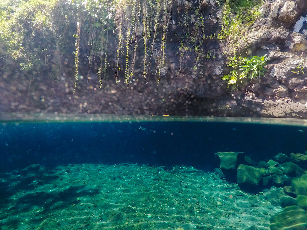 Split view of Piula Cave Pool swimming hole with a fish swimming in beautiful clear water - at Upolu Island, Western Samoa, South Pacific